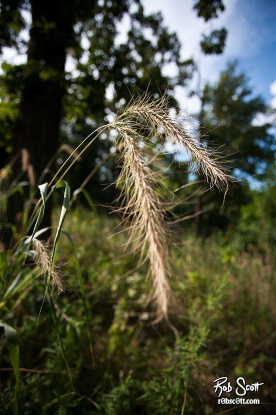 Summer's Crop